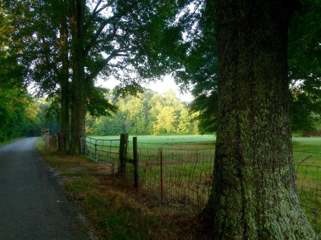TN Greenery
